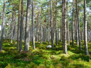 Bannwaldgebiet