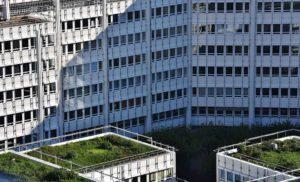 Dachbegrünung Dachgarten Immobiliengutachter Melanie C. Weinz