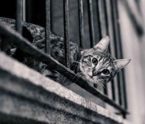 Fangnetz Balkon Sachverständige Immobilien Gutachter Melanie C. Weinz