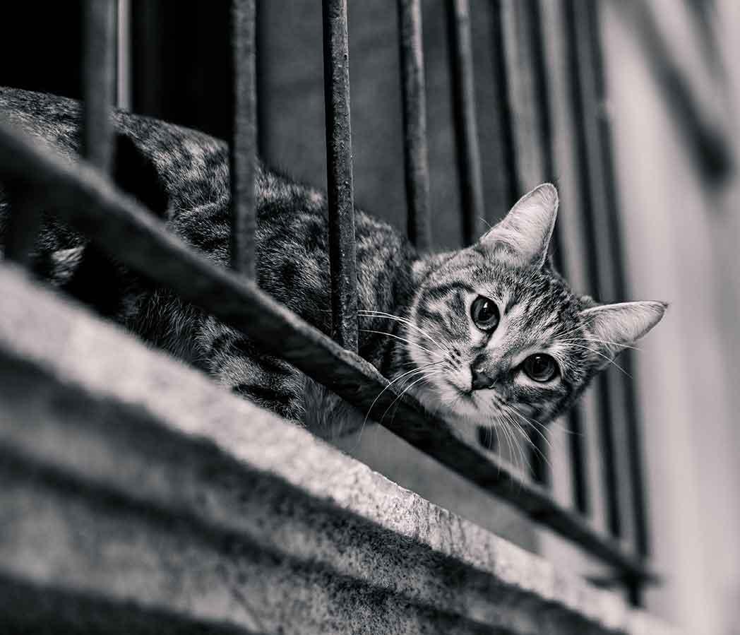 Fangnetz / Balkon