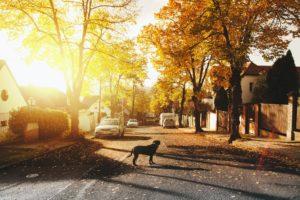 Hund auf Straße in Sonnenuntergang